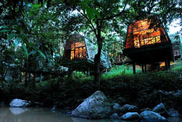 Borneo4